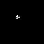 Tierheilpraxis Schwingler